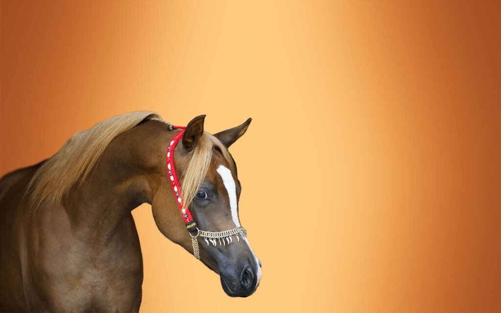 koňská sleva